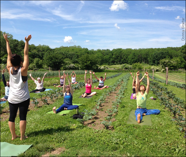 yoga in the orchards